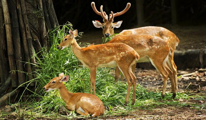 Malsi-Deer-Park